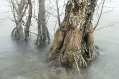Δέντρα στη λίμνη στοκ εικόνες