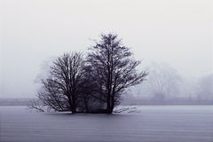 Δέντρα στη μέση της λίμνης Στοκ Εικόνες