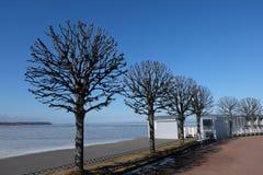 Δέντρα στη Ρωσία Στοκ φωτογραφία με δικαίωμα ελεύθερης χρήσης