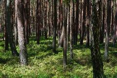 Δέντρα στη σκιά Στοκ Φωτογραφίες