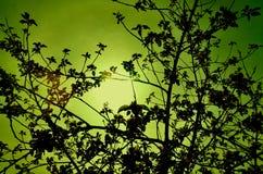 Δέντρα στη φύση Στοκ εικόνα με δικαίωμα ελεύθερης χρήσης