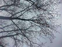 Δέντρα στη φύση Στοκ φωτογραφία με δικαίωμα ελεύθερης χρήσης