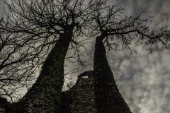Δέντρα στις καταστροφές Στοκ φωτογραφία με δικαίωμα ελεύθερης χρήσης