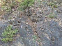 Δέντρα στον απότομο βράχο Στοκ εικόνα με δικαίωμα ελεύθερης χρήσης
