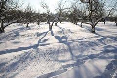 Δέντρα στον κήπο που καλύπτεται με το χιόνι Στοκ Εικόνες