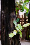 Δέντρα στον κήπο στο ξύλινο πράσινο backgroung Στοκ φωτογραφίες με δικαίωμα ελεύθερης χρήσης