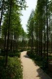 Δέντρα στον κήπο Στοκ εικόνες με δικαίωμα ελεύθερης χρήσης
