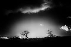 Δέντρα στον ορίζοντα Στοκ φωτογραφία με δικαίωμα ελεύθερης χρήσης
