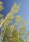 δέντρα στον ουρανό στοκ εικόνες με δικαίωμα ελεύθερης χρήσης