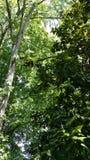 Δέντρα στον ουρανό Στοκ φωτογραφία με δικαίωμα ελεύθερης χρήσης