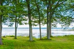 Δέντρα στον ποταμό στοκ φωτογραφία με δικαίωμα ελεύθερης χρήσης