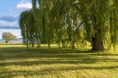 Δέντρα στον ποταμό στοκ εικόνα