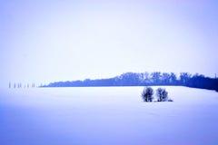 Δέντρα στον τομέα, η πορφύρα χρώματος Στοκ εικόνα με δικαίωμα ελεύθερης χρήσης