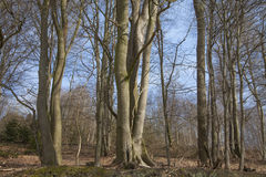 Δέντρα στο δάσος με το μπλε ουρανό Στοκ εικόνες με δικαίωμα ελεύθερης χρήσης