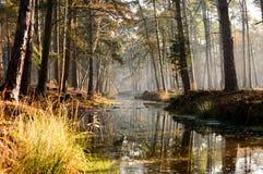 Δέντρα στο δάσος που φθάνει πέρα από το ήρεμο ρεύμα Στοκ φωτογραφία με δικαίωμα ελεύθερης χρήσης
