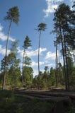 Δέντρα στο δάσος Στοκ Φωτογραφία