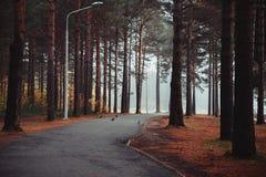 Δέντρα στο δάσος Στοκ φωτογραφίες με δικαίωμα ελεύθερης χρήσης