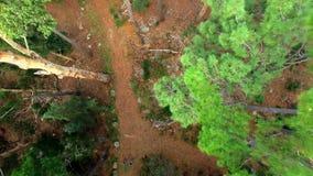 Δέντρα στο δάσος απόθεμα βίντεο