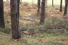 Δέντρα στο δάσος Στοκ εικόνες με δικαίωμα ελεύθερης χρήσης