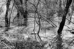 Δέντρα στο έλος Στοκ Εικόνες