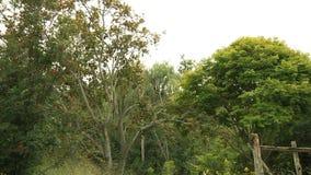 Δέντρα στο δασικό τοπίο απόθεμα βίντεο