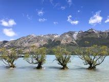 Δέντρα στο βουνό λιμνών και το υπόβαθρο ουρανού στοκ εικόνες
