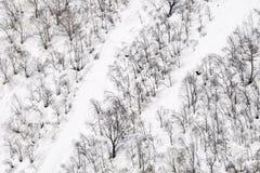 Δέντρα στο βουνό χιονιού Στοκ Φωτογραφία