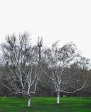 Δέντρα στο βουνό Στοκ εικόνες με δικαίωμα ελεύθερης χρήσης