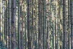 Δέντρα στο δάσος στην κάθετη δομή στοκ εικόνες