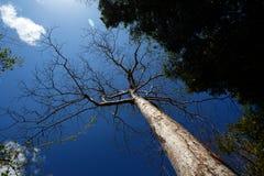 Δέντρα στο εθνικό πάρκο Ankarana, αγριότητα της Μαδαγασκάρης Στοκ φωτογραφία με δικαίωμα ελεύθερης χρήσης