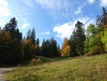 Δέντρα στο ελβετικό Jura Στοκ Εικόνα