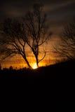 Δέντρα στο ηλιοβασίλεμα Στοκ Φωτογραφίες