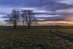 Δέντρα στο ηλιοβασίλεμα Στοκ εικόνες με δικαίωμα ελεύθερης χρήσης