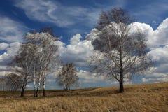 Δέντρα στο λιβάδι ενάντια στον ουρανό άνοιξη στοκ εικόνες