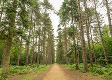 Δέντρα στο μαύρο πάρκο Στοκ Εικόνες