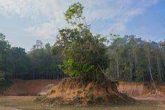 Δέντρα στο μικρό λόφο που δημιουργείται από την καθίζηση εδάφους στοκ φωτογραφίες