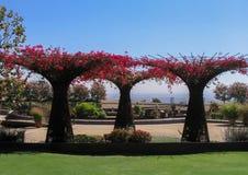 Δέντρα στο μουσείο Getty στοκ εικόνα με δικαίωμα ελεύθερης χρήσης