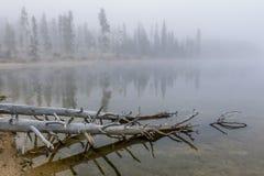Δέντρα στο νερό στη λίμνη του Stanley Στοκ Εικόνες