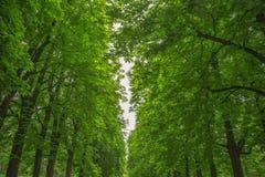 Δέντρα στο νύχι πάρκων, με HDR Στοκ Φωτογραφία