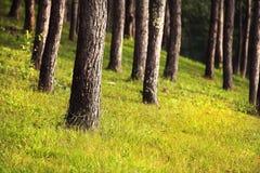 Δέντρα στο πάρκο έθνους Στοκ Εικόνες