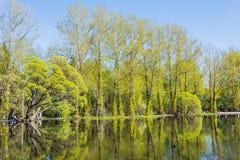 Δέντρα στο πάρκο κοντά στην ηλιόλουστη ημέρα λιμνών την άνοιξη Στοκ Φωτογραφίες