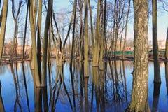 Δέντρα στο πάρκο που πλημμυρίζουν με το νερό Στοκ φωτογραφίες με δικαίωμα ελεύθερης χρήσης