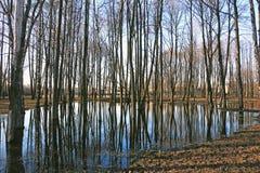 Δέντρα στο πάρκο που πλημμυρίζουν με το νερό Στοκ εικόνες με δικαίωμα ελεύθερης χρήσης