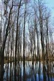Δέντρα στο πάρκο που πλημμυρίζουν με το νερό Στοκ φωτογραφία με δικαίωμα ελεύθερης χρήσης