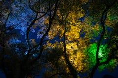 Δέντρα στο πάρκο στην Κίνα τή νύχτα Στοκ Εικόνες