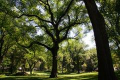 Δέντρα στο πάρκο στο φως της ημέρας Στοκ Φωτογραφίες
