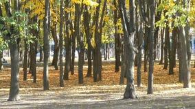 Δέντρα στο πάρκο φθινοπώρου πόλεων απόθεμα βίντεο