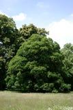Δέντρα στο πάρκο Στοκ Εικόνες
