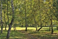 Δέντρα στο πάρκο στοκ εικόνα με δικαίωμα ελεύθερης χρήσης