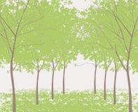 Δέντρα στο πάρκο ελεύθερη απεικόνιση δικαιώματος